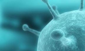 Лечение генитального герпеса народными средствами